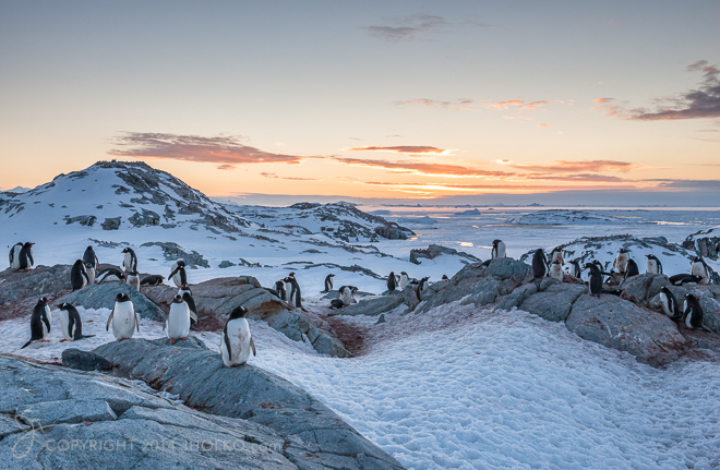 Penguin Rookery at Petermann Island in Antarctica. Incredible mi