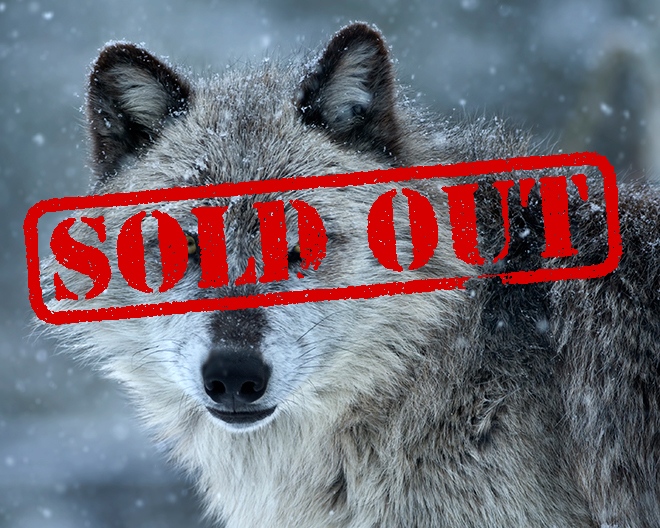 Yellowstone Sold Out