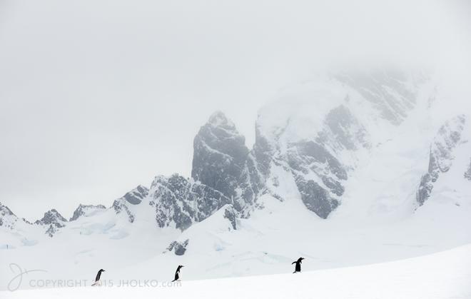 Antarctica-2380-Edit82014