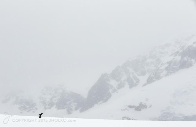 Antarctica-4470-Edit12014