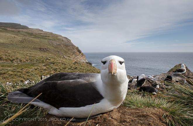 FalklandIslands-096412014