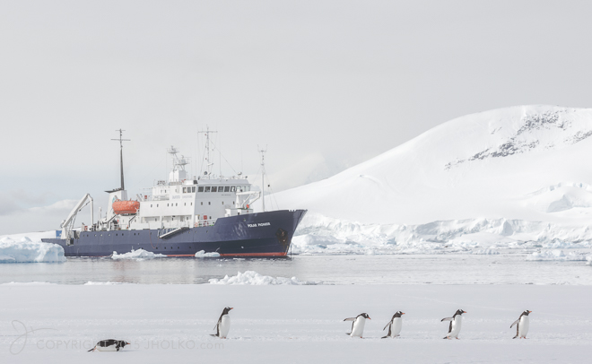 PolarPioneer and Penguins