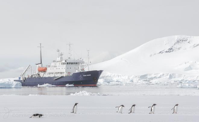 PolarPioneer and Penguins