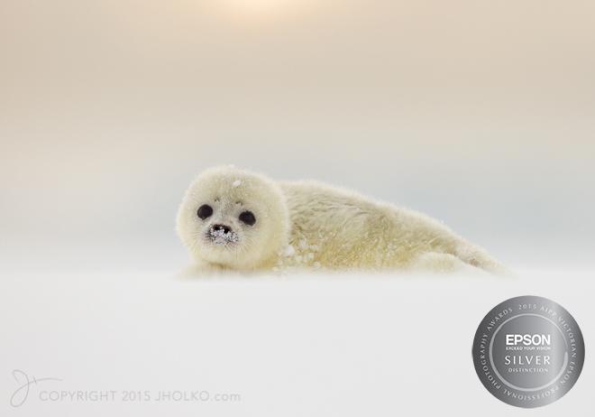 Svalbard-9939-Edit22015