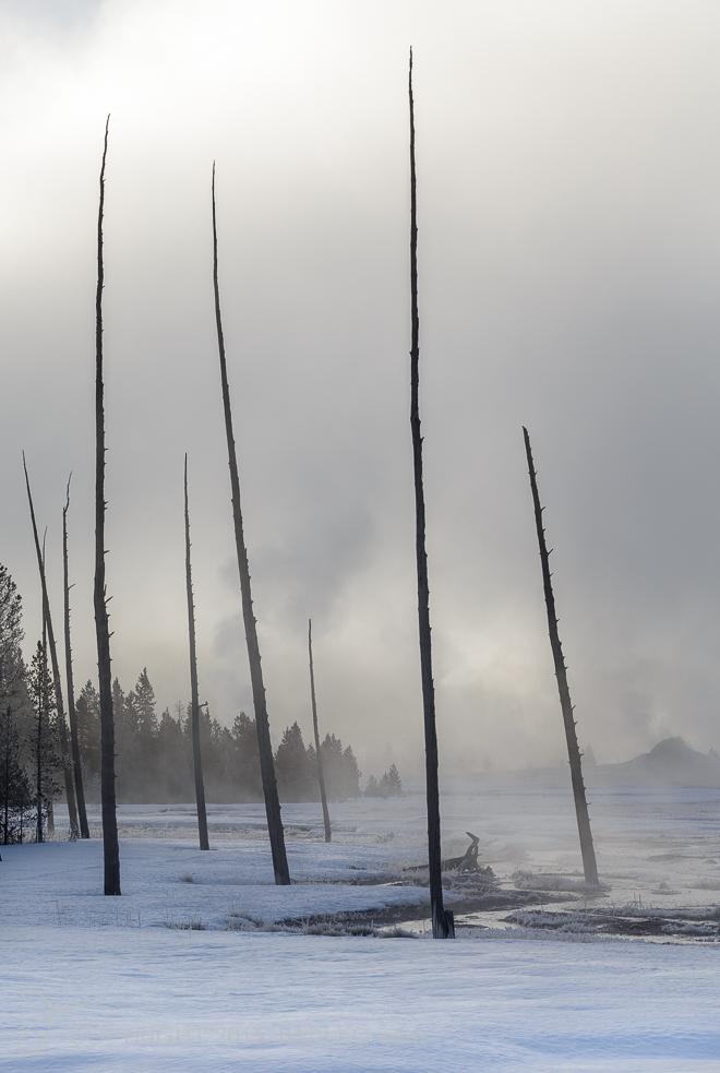Yellowstone-706712015