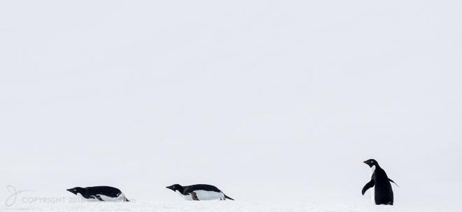 Antarctica2015-6409-Edit