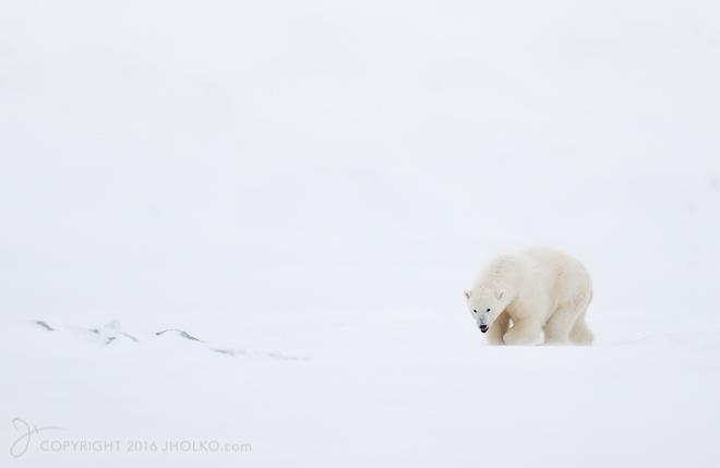 Svalbard-8616-Edit-2