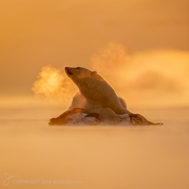 Svalbard-9725-Edit