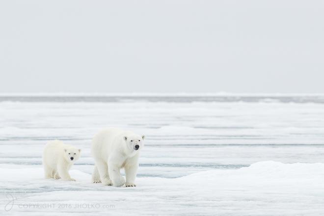 Svalbard2016-24158