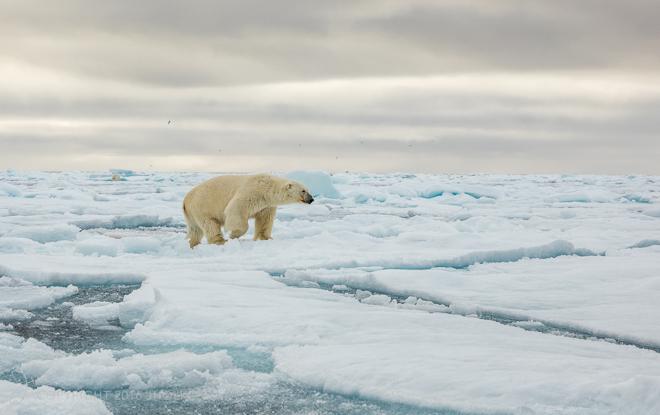 Svalbard2016-5843-Edit