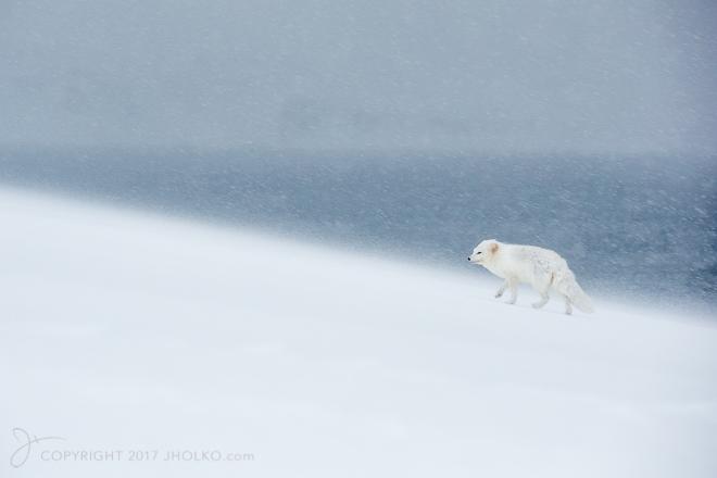 arcticfoxiceland-9910-edit