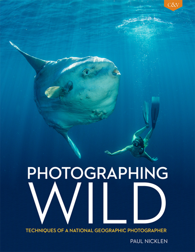 photographingwild